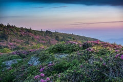 Grassy Ridge Covered in Rhododendron at Sunset Royalty Free Stock Photos