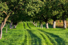 Grassy Road through Sunlit Alley Stock Image
