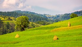 Grassy rural field on hillside. Few haystack and tree on a slope. lovely countryside afternoon stock image