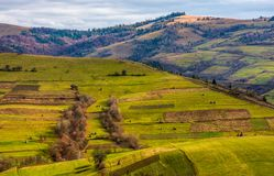 Grassy rural hill in late autumn sunny day. Beautiful scenery in mountainous area royalty free stock image
