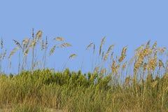 Grassy sand dune Royalty Free Stock Photo