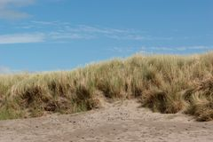 Grassy Sand Dune with Blue Sky. Grassy sand dune taken from low angle with blue sky above Royalty Free Stock Photography