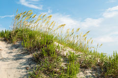 Grassy Sand Dune on Coquina Beach at Nags Head royalty free stock photography