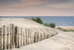 Grassy sand dunes landscape at sunrise Stock Images