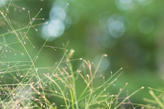 Grassy seed background Royalty Free Stock Photo