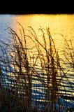 Grassy Shore. Grassy lake shore at sunset Royalty Free Stock Photo
