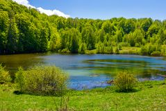 Grassy shore of mountain lake among the forest. Beautiful scenery in fine springtime weather Royalty Free Stock Photo