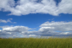 Grassy Sky Royalty Free Stock Images