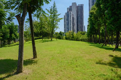Grassy slope in city of sunny summer Royalty Free Stock Images