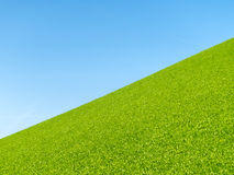 Grassy slope Royalty Free Stock Photo