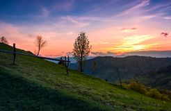 Grassy slope rural area at sunset. Beautiful mountainous landscape of Ukainian Carpathians in springtime Stock Image