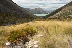 Grassy slopes above lake Ohau Stock Images
