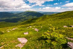 Grassy slopes of Carpathian mountains. Beautiful summer landscape on a cloudy day. location Runa mountain, Ukraine Royalty Free Stock Photos