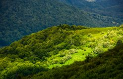 Grassy slopes of Carpathian mountains. Beautiful summer landscape on a cloudy day. location Runa mountain, Ukraine Royalty Free Stock Image