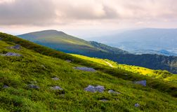 Grassy slopes of Runa mountain in the morning. Beautiful summer landscape of Carpathian mountains Royalty Free Stock Photo