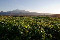Grassy squares and Etna volcano Stock Photos
