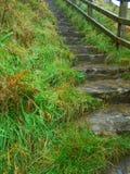 Grassy Steps Stock Photo