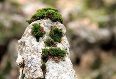 Grassy stone Royalty Free Stock Photo