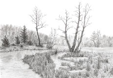 Grassy swamp with stream and trees. Graphite pencil on paper Royalty Free Stock Photos