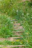 Grassy track leading up steps Royalty Free Stock Photos
