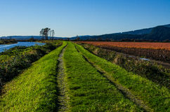 Grassy trail Royalty Free Stock Image