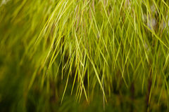 Grassy Tree Royalty Free Stock Images