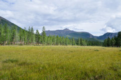 Grassy valley along the mountain ridge. Stock Photography