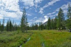 Grassy valley along the mountain ridge. Royalty Free Stock Photo