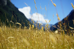 Grassy valley through Southern Alps. Stock Photography