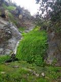 Grass waterfall Stock Image