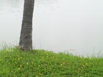 Grassy waterfront Stock Photos