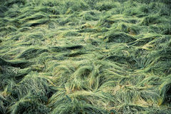 Grassy waves. On the meadow Royalty Free Stock Photos