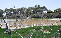 Grassy Wetland Landscape: Lake Coogee, Western Australia Stock Photography