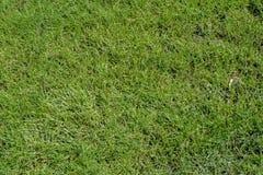 Grastextuur of grasachtergrond Stock Foto