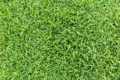 Grastextuur of grasachtergrond groen gras voor golfcursus, voetbalgebied of sporten achtergrondconceptontwerp stock afbeeldingen