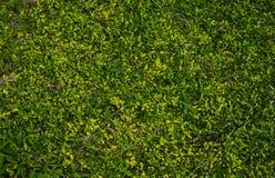 Grastextuur met veelvoudige schaduwen van groen stock afbeeldingen