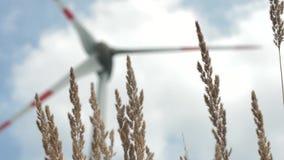 Grasunkräuter, die in den Wind sich bewegen stock footage