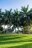 Grasveld en kokospalmen in de tuin Royalty-vrije Stock Fotografie