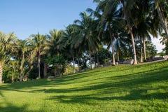 Grasveld en kokospalmen in de tuin Stock Foto's