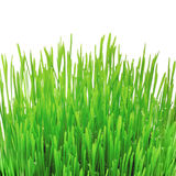 Graswachstum Stockfotos