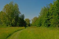 Grasweg door een zonnige weide met gele wildflowers met weelderig groen erachter bos royalty-vrije stock afbeelding