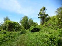 Grasweg im Wald lizenzfreies stockbild