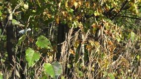 Grasweide en boom bij vroege de herfstochtend 4K stock footage