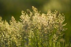 Grasweide en weiden in de zomer Stock Foto's