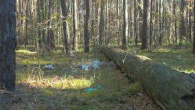 Grat w lesie, śmieci zdjęcie wideo