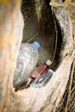 grat w pustym wydr??eniu drzewo natura znika natury ochrony poj?cie, ekologia Klingeryt butelki w lesie zdjęcia royalty free