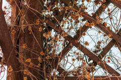 Grate for backgrounds, wooden diamonds. Lattice with plants in the winter in the form of rhombuses stock images