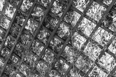 Grate for backgrounds, wooden diamonds. Lattice with plants in the winter in the form of rhombuses Stock Photography