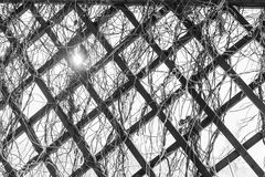 Grate for backgrounds, wooden diamonds. Lattice with plants in the winter in the form of rhombuses royalty free stock photo