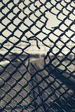 Grate. A grate with a blurred background Royalty Free Stock Photo